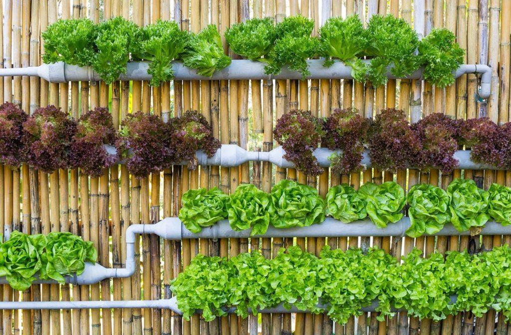 вертикальная овощная клумба