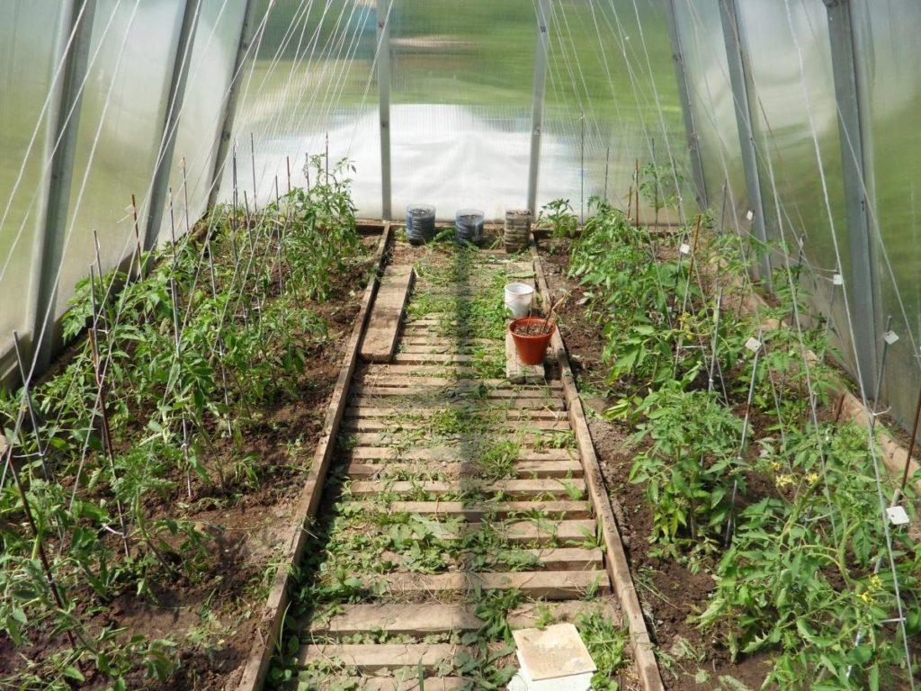 Высадка помидоров в теплицу из поликарбоната
