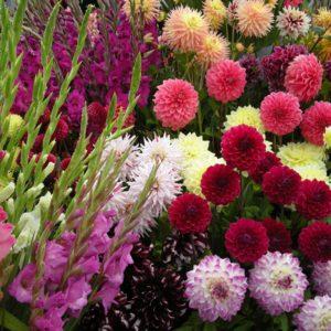 Какие цветы цветут осенью на клумбах