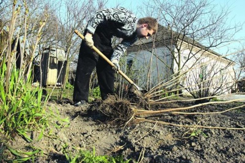 что делать в саду весной в первую очередь